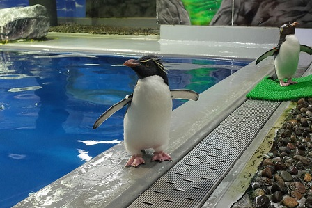 越前松島水族館のペンギン